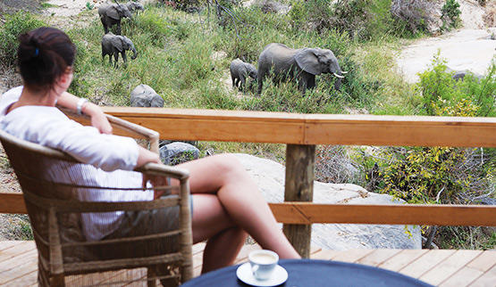 See elephants from the deck of Londolozi Founders Camp.