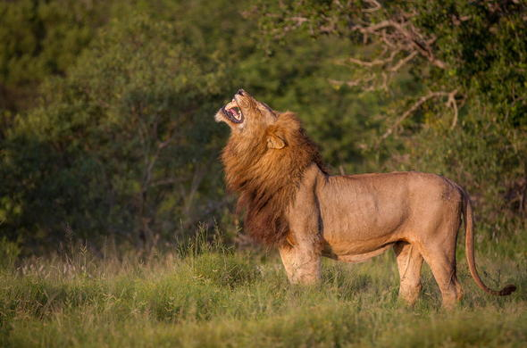 Sabi Sands is home to the big five.