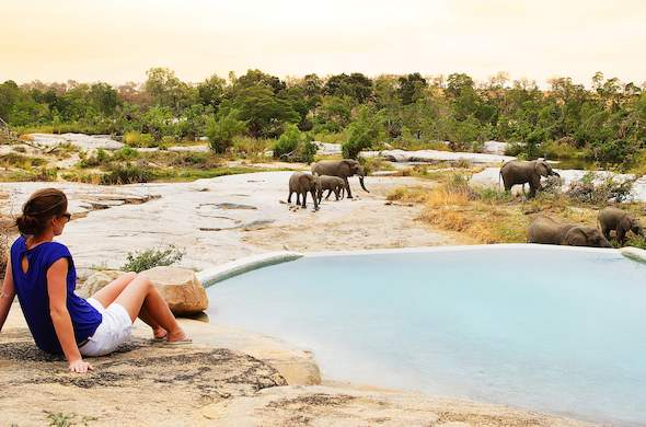 Watch the elephant interactions next to Londolozi Private Granite Suites.