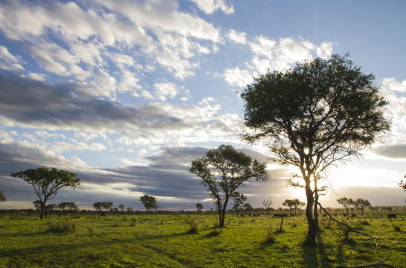 The natuaral landscape of the Londolozi Game Reserve